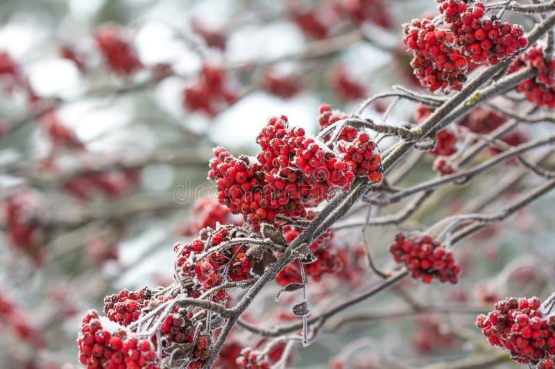 Хрустящее утро зимы в Эстонии стоковое изображение