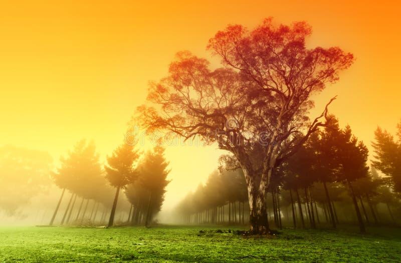 хрустящий восход солнца пущи стоковое изображение