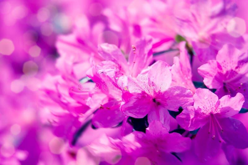 Художественная естественная предпосылка с красивыми розовыми цветками Фантастическая предпосылка природы стоковое изображение