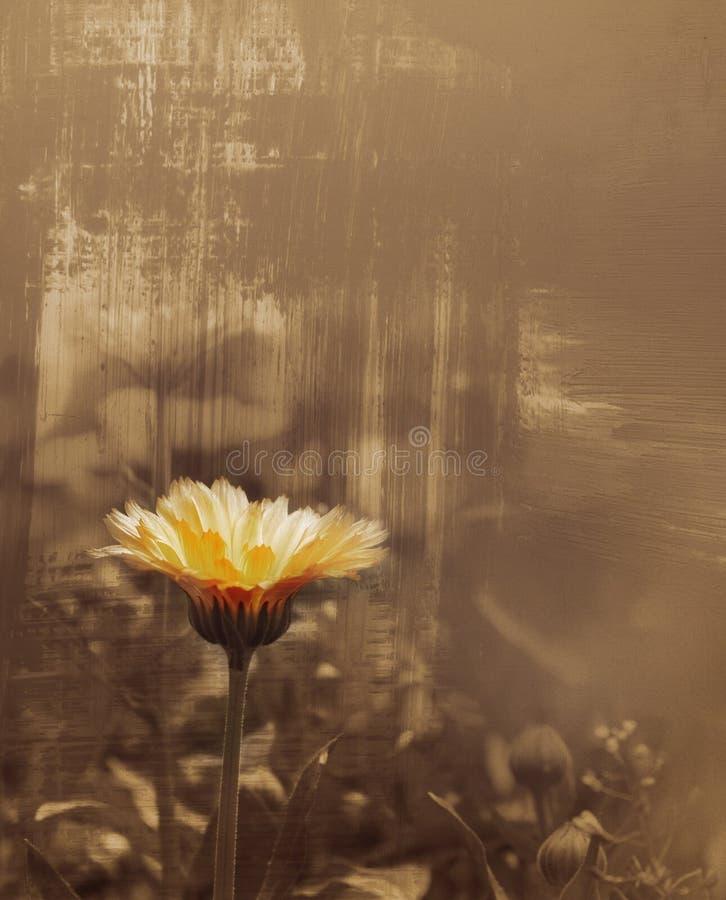 художнический фасонируемый цветок старый стоковое изображение rf