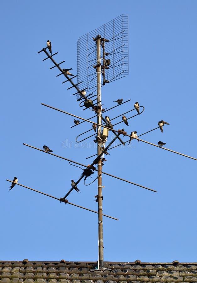 хуторянин антенны заглатывает tv стоковые фотографии rf