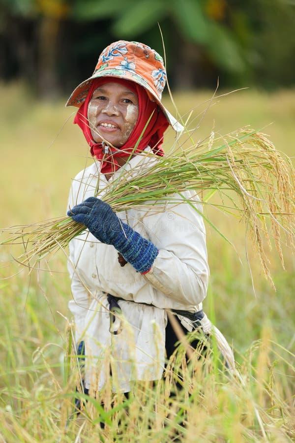Хуторянин риса стоковые фото