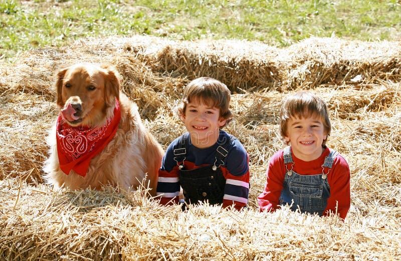 хуторянин собаки немногая стоковое изображение rf