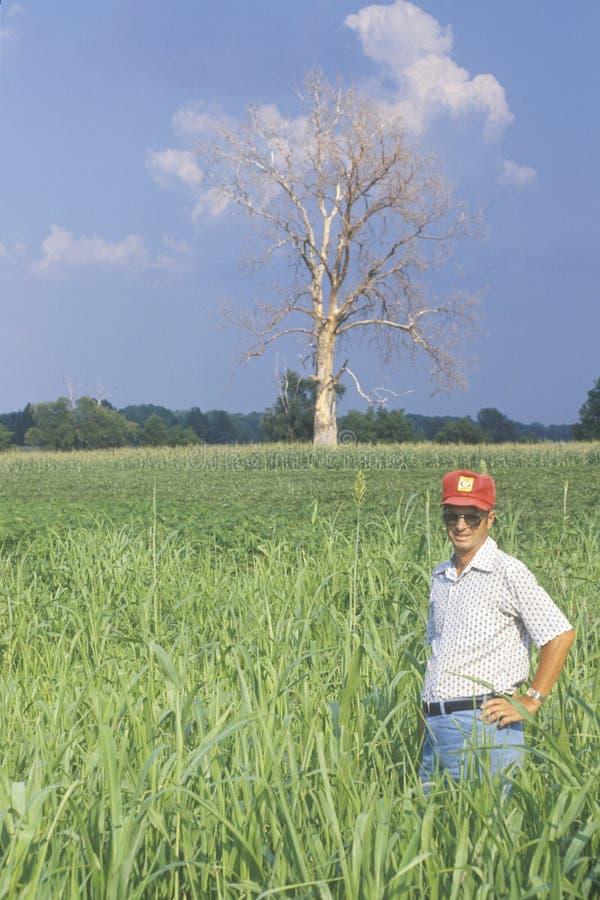 Хуторянин стоя в поле сои стоковое изображение