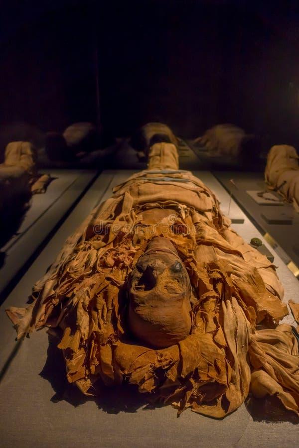 ХЬЮСТОН, США - 12-ОЕ ЯНВАРЯ 2017: Изумительные мумии обернутые с некоторыми ветошами древнего египета в Национальном музее  стоковое фото rf
