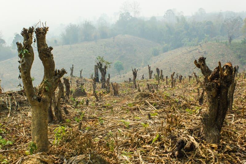Хлещите и сгорите культивирование, тропический лес отрезанный и, который сгоренный для того чтобы засадить стоковое изображение