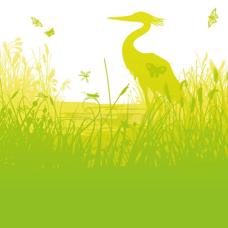 Цапля в тростниках на береге озера бесплатная иллюстрация