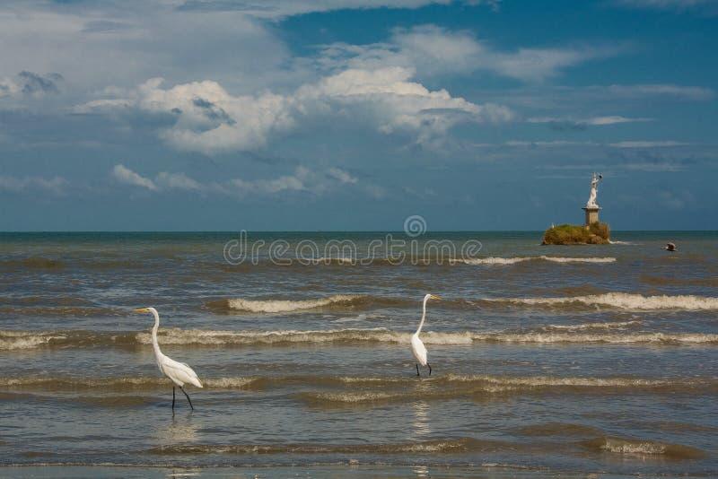 Цапли и пеликаны улавливая рыб на береге в Ливингстоне стоковые изображения