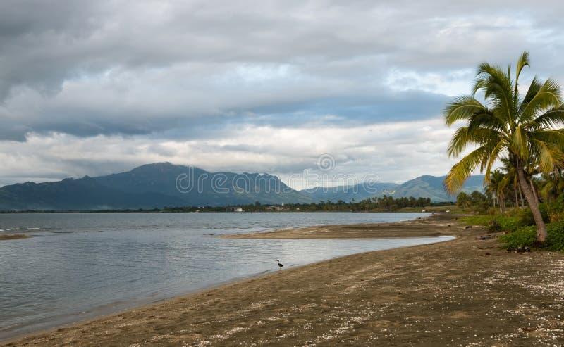 Цапля на крае воды на штормовой погоде, Фиджи стоковые изображения rf