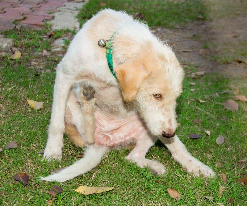 царапать собаки бездомной собаки стоковые изображения rf