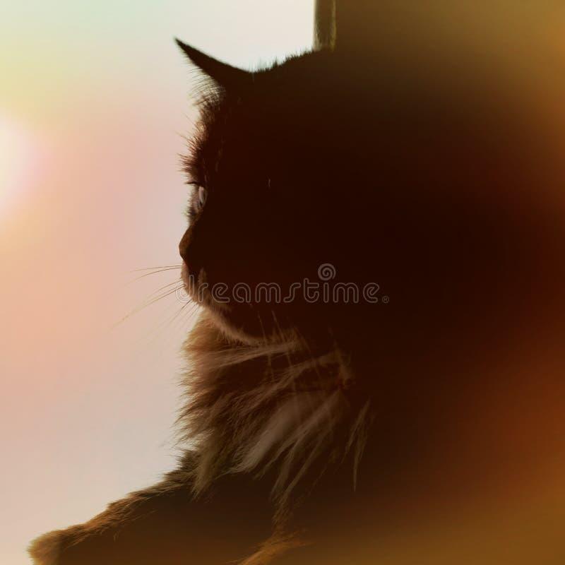 Download Царственная львица стоковое изображение. изображение насчитывающей вне - 81805929