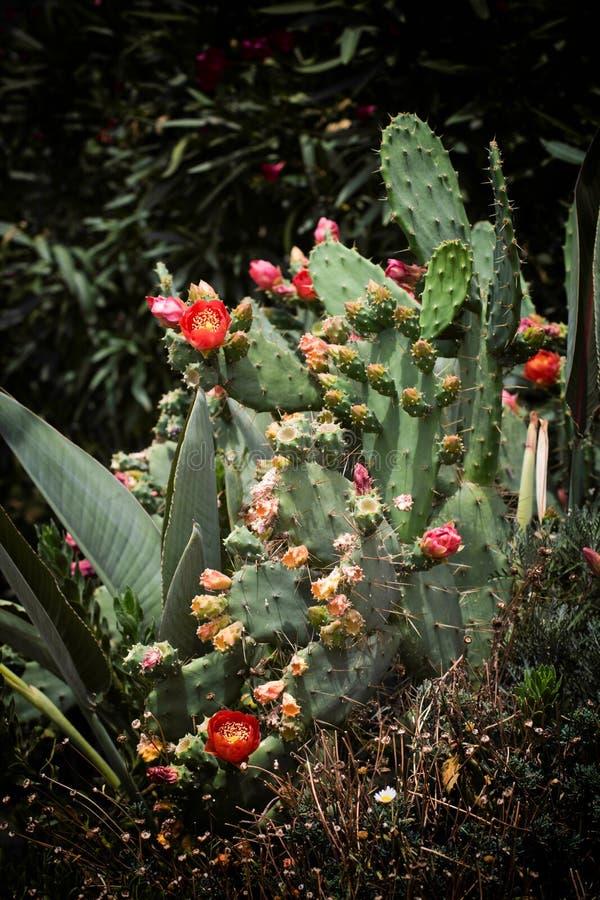 цвести кактуса clumy цветет рост как новые стороны малые стоковые фото