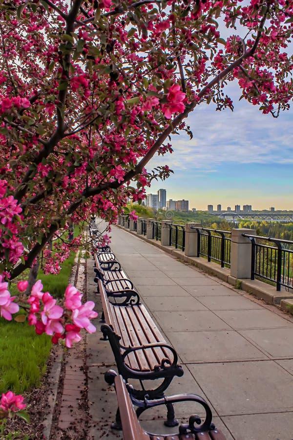 Цвести тропа цветка весеннего времени стоковые фото