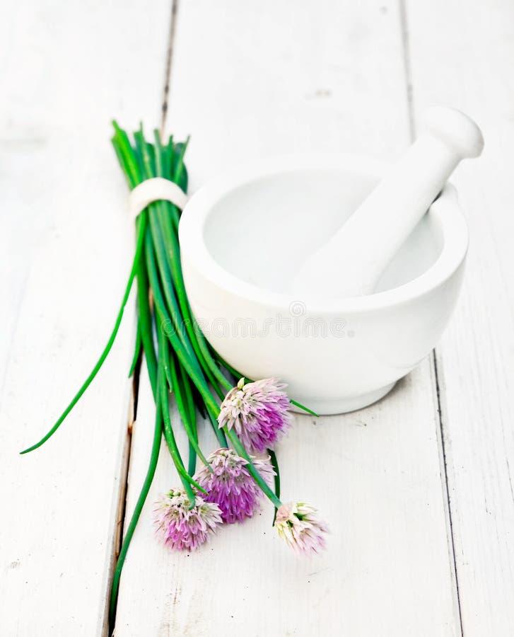 цвести chives одичалый стоковое фото rf