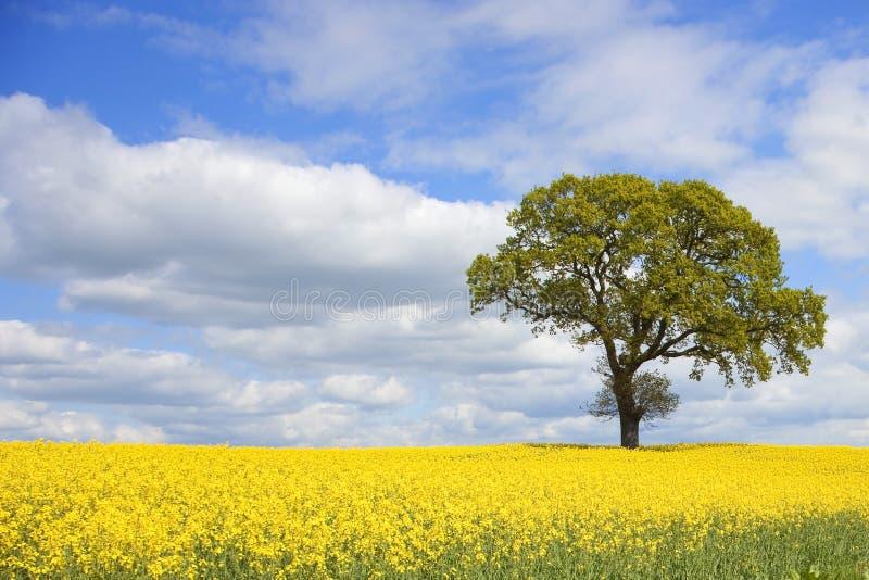 цветастая весна дня стоковое изображение rf