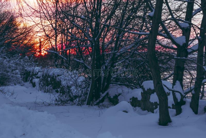 цветастая зима восхода солнца стоковые фотографии rf