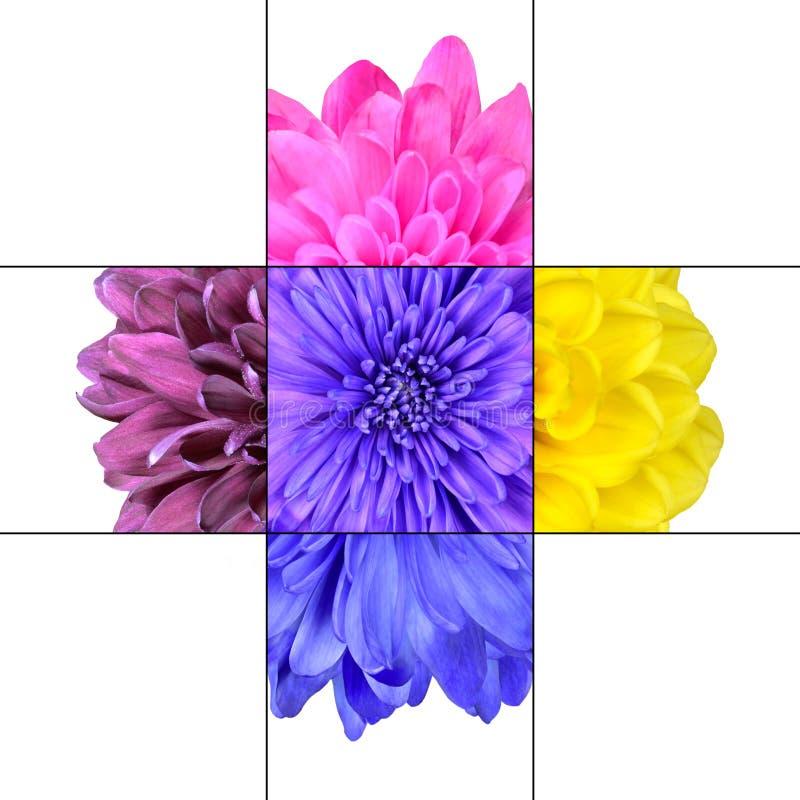 Цветастая конструкция мозаики цветка хризантемы иллюстрация вектора
