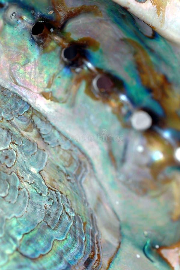 цветастая раковина Стоковые Фотографии RF