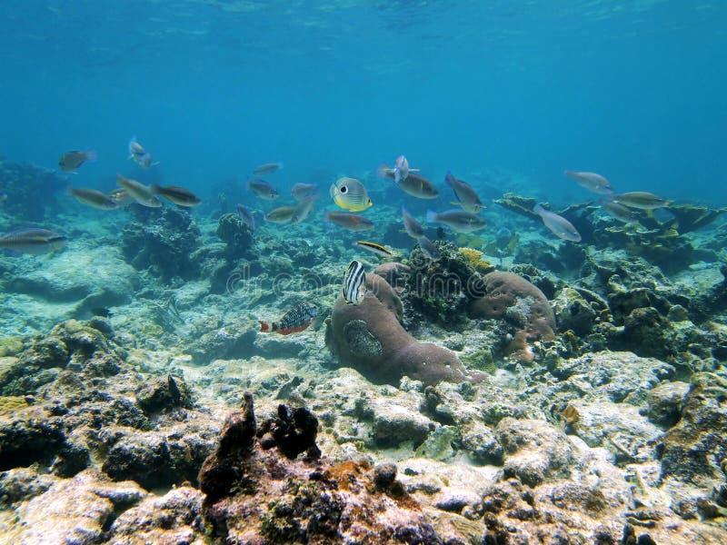цветастая школа рыб стоковые изображения