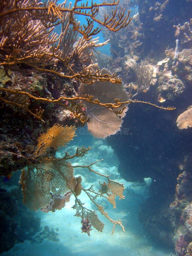 цветастое место кораллового рифа стоковые изображения rf