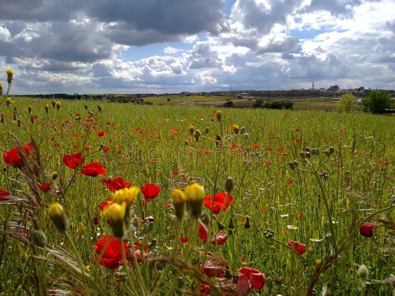 цветастое поле стоковая фотография rf