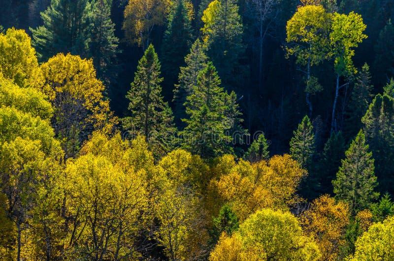Download цветастые валы стоковое изображение. изображение насчитывающей sunlit - 81808583