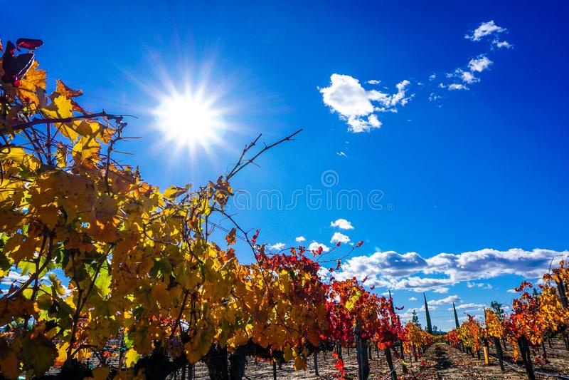 цветастые виноградники долины Германии rhine стоковая фотография rf