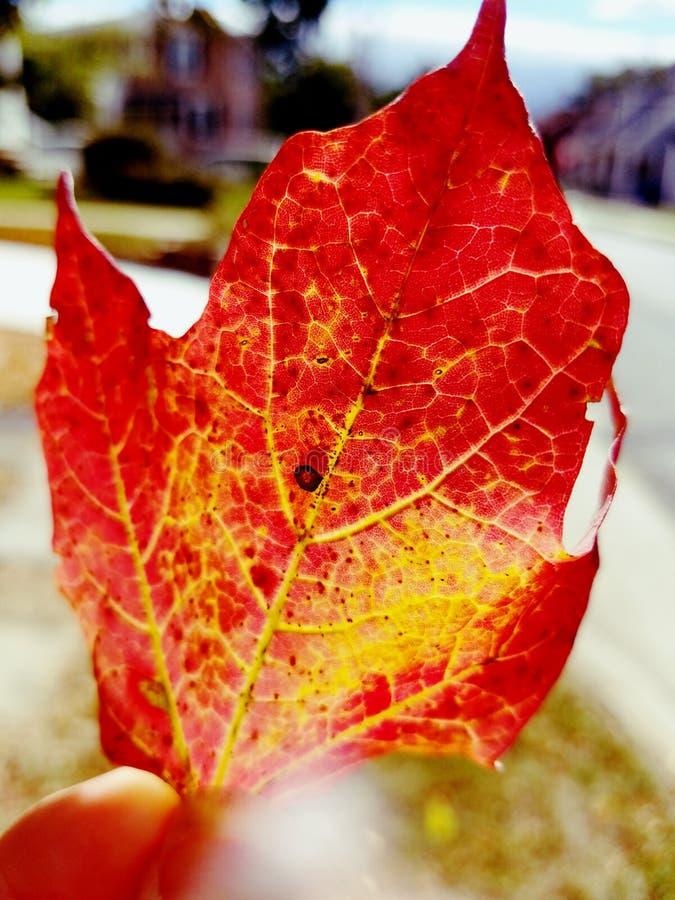 цветастые листья падения стоковое изображение