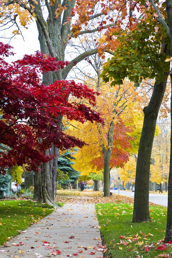 цветастые листья успокаивают тротуар стоковое изображение