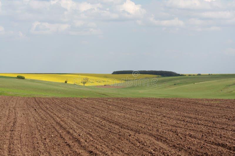 цветастые поля стоковое фото rf
