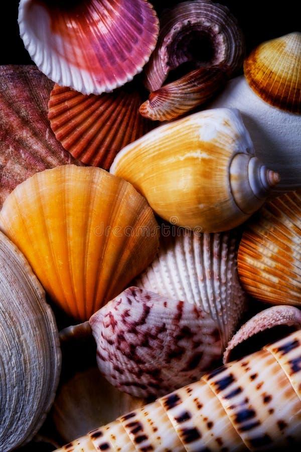 цветастые раковины моря стоковые изображения rf