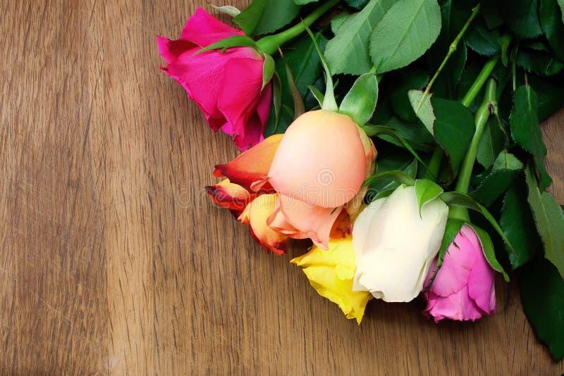 цветастые розы стоковое изображение
