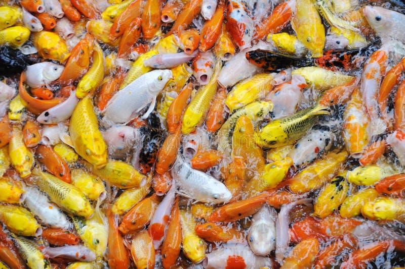 Цветастые рыбы стоковое фото rf