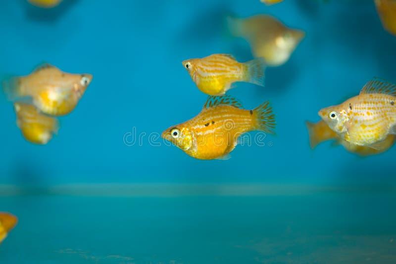 Download цветастые рыбы стоковое изображение. изображение насчитывающей цветы - 6859505