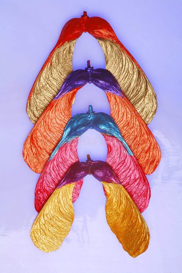 цветастые семена клена стоковые фотографии rf