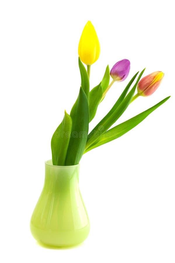 Цветастые тюльпаны стоковые фото