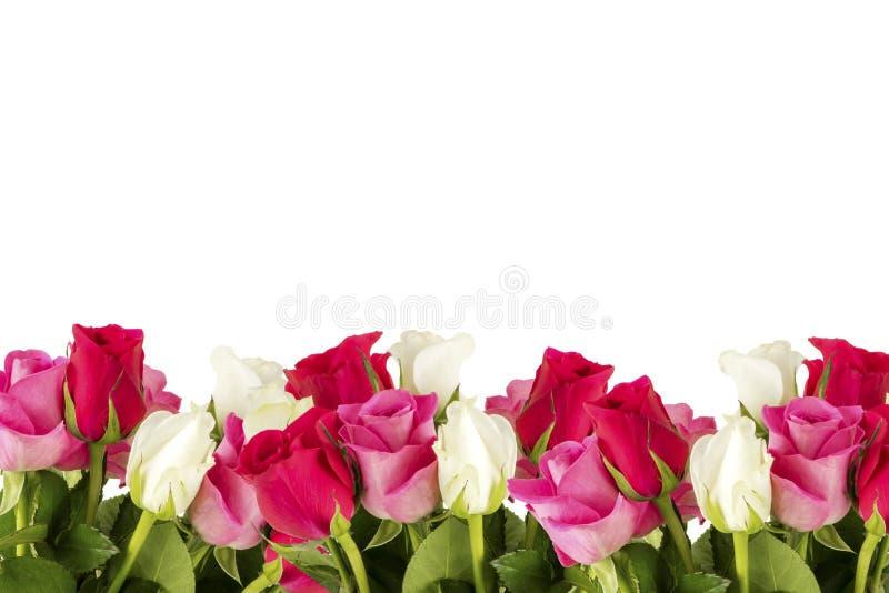 цветастые цветки обрамляют много роз стоковые изображения