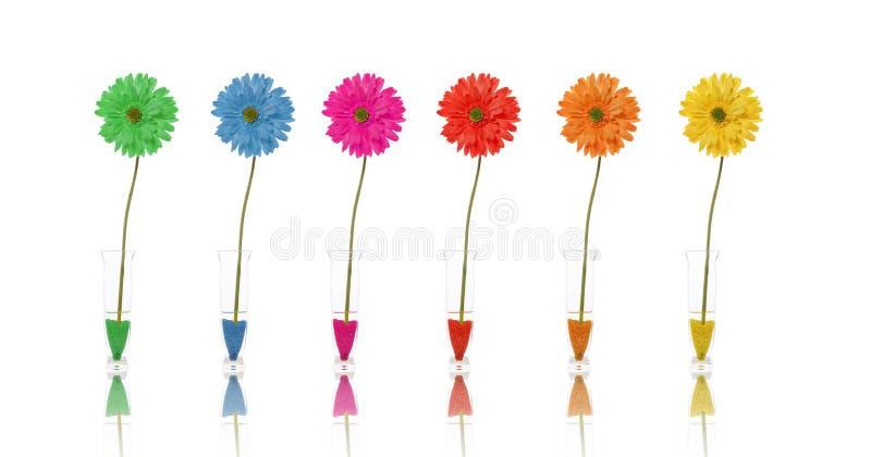 цветастые цветки стоковая фотография