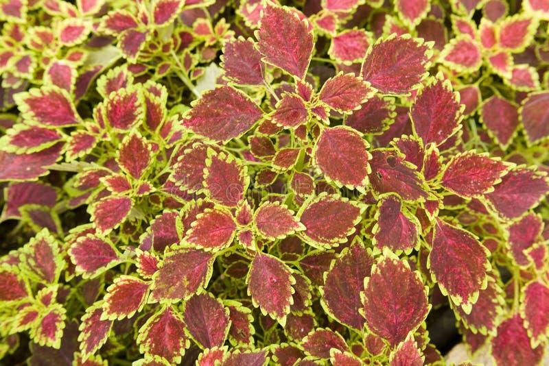 цветастый завод листьев стоковое фото rf