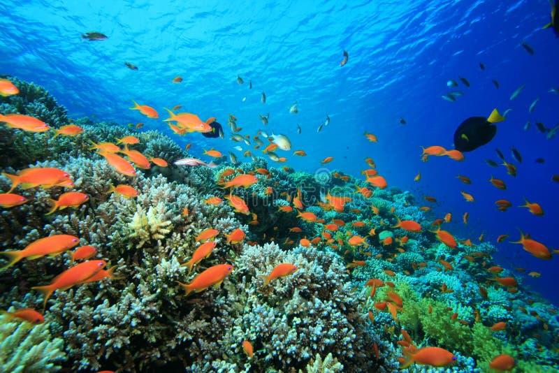 цветастый коралловый риф стоковое фото