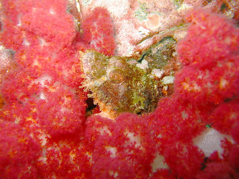 цветастый коралловый риф стоковое изображение