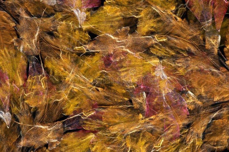Download Цветастый крупный план лепестка цветка Стоковое Фото - изображение насчитывающей флористическо, листья: 33729216