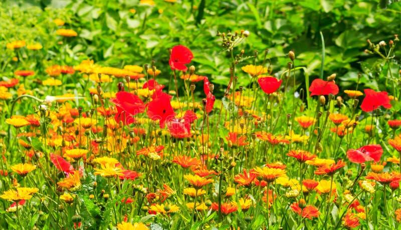 Цветастый лужок цветка в лете стоковые изображения