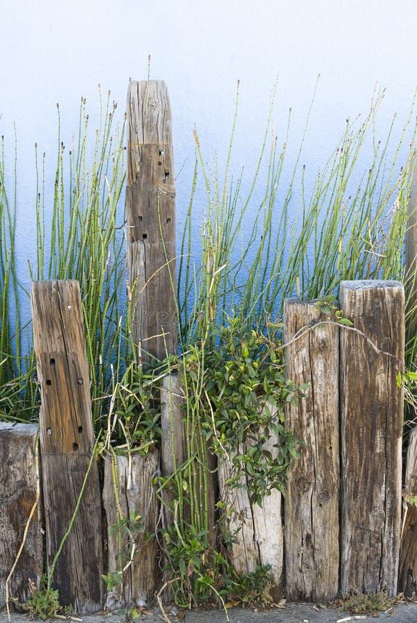цветастый плантатор поддерживает тимберс стоковые фото