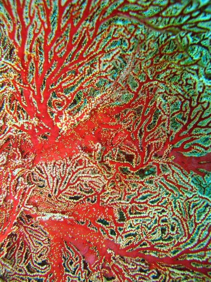 цветастый риф завода коралла стоковая фотография rf