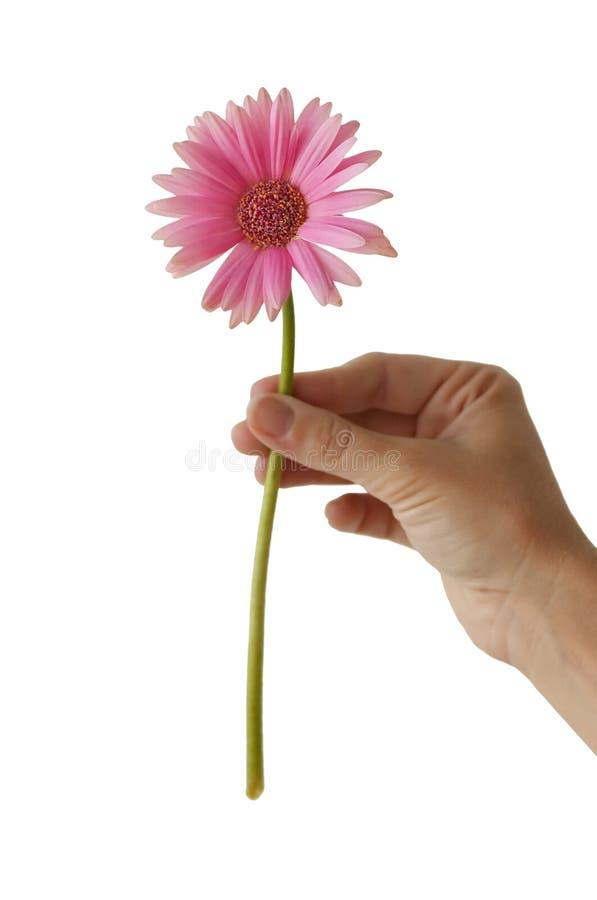 цветастый цветок стоковые фото