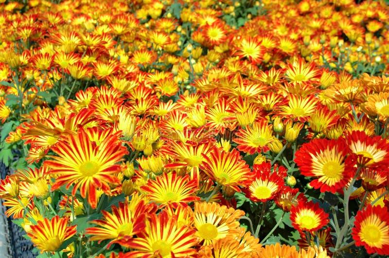 Цветастый цветок стоковые изображения rf