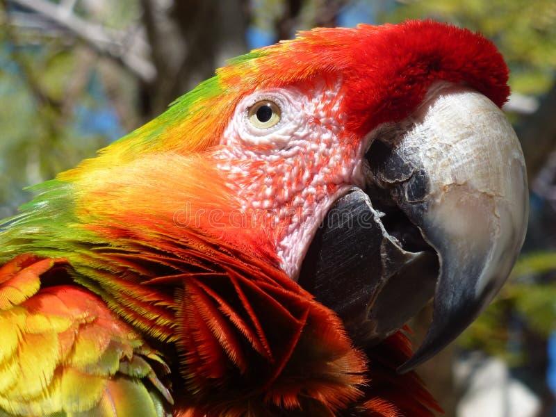 цветастый macaw стоковое фото