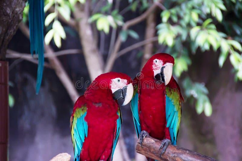 цветастый macaw стоковая фотография