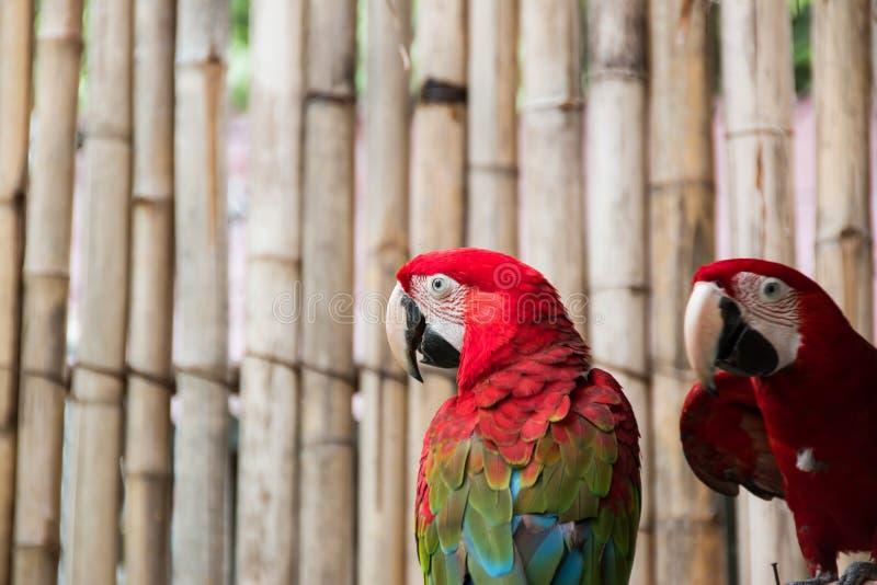 цветастый macaw стоковые изображения